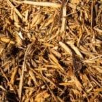 Cypress Mulch closeup